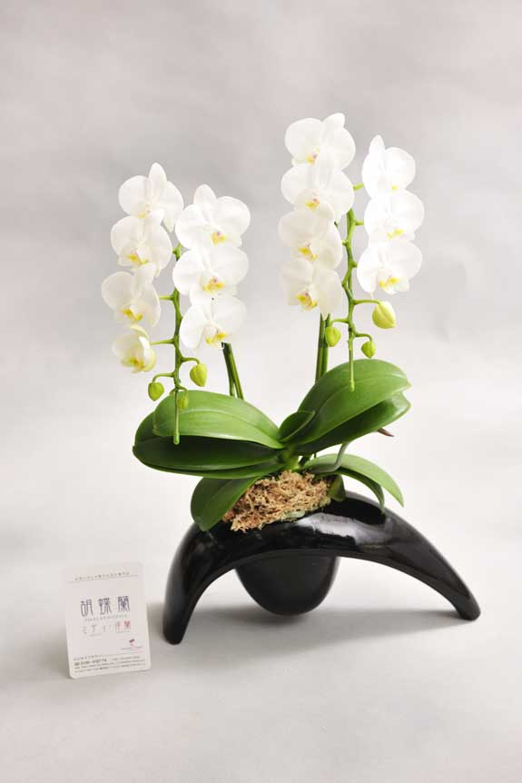 <p>お花は農林水産大臣賞の受賞歴ある厳選生産者よりお届けいたします。</p>