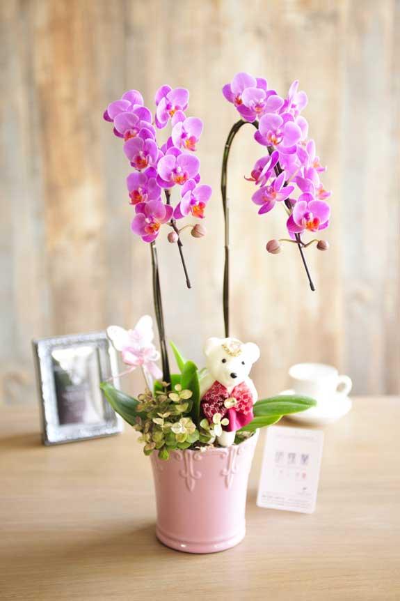 <p>お部屋、オフィス、店舗などの屋内空間を可愛く明るく演出してくれる胡蝶蘭ミディ2本立デコレレベアーはフラワーギフト、贈り物にオススメです。</p>