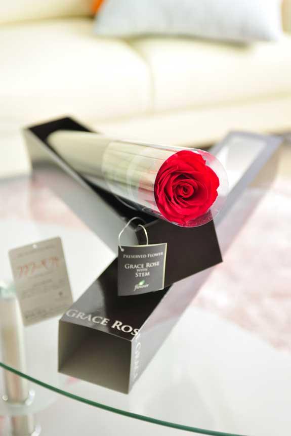 <p>プリザーブドフラワーLuxury Rose(チェリーレッドト)は各種お祝い事の簡単なフラワーギフトや贈り物にオススメです。</p>