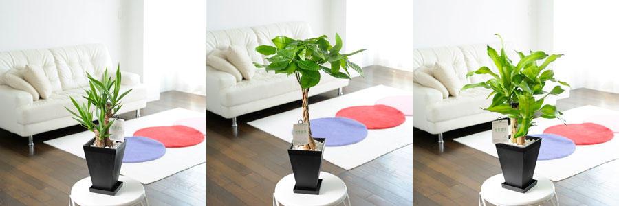 観葉植物・小型
