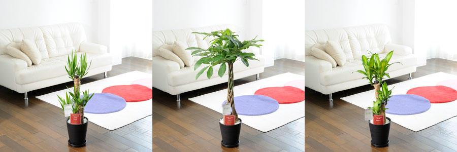 観葉植物・中~小型