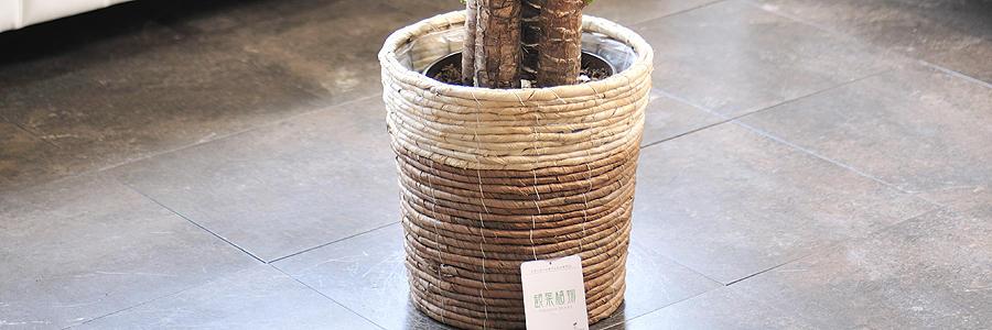 観葉植物・バスケット鉢
