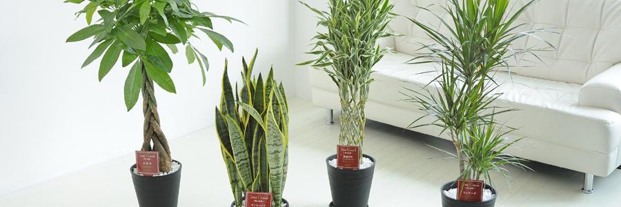 観葉植物・複数セット