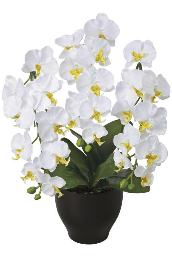 <p>新しい門出を迎える方への贈り物に人気の胡蝶蘭の造花アート・アレンジメント</p>