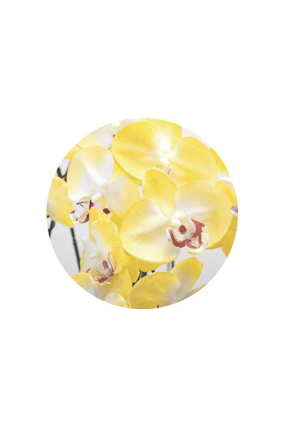 <p>リアリティを追求した胡蝶蘭の高級造花アート・アレンジメント</p>