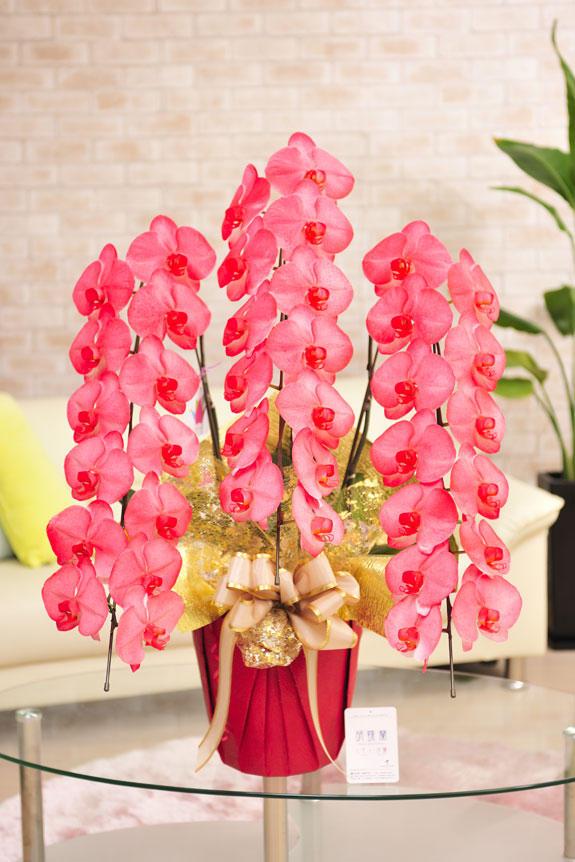 カラー胡蝶蘭 彩 - irodori - 3本立36輪以上(赤)