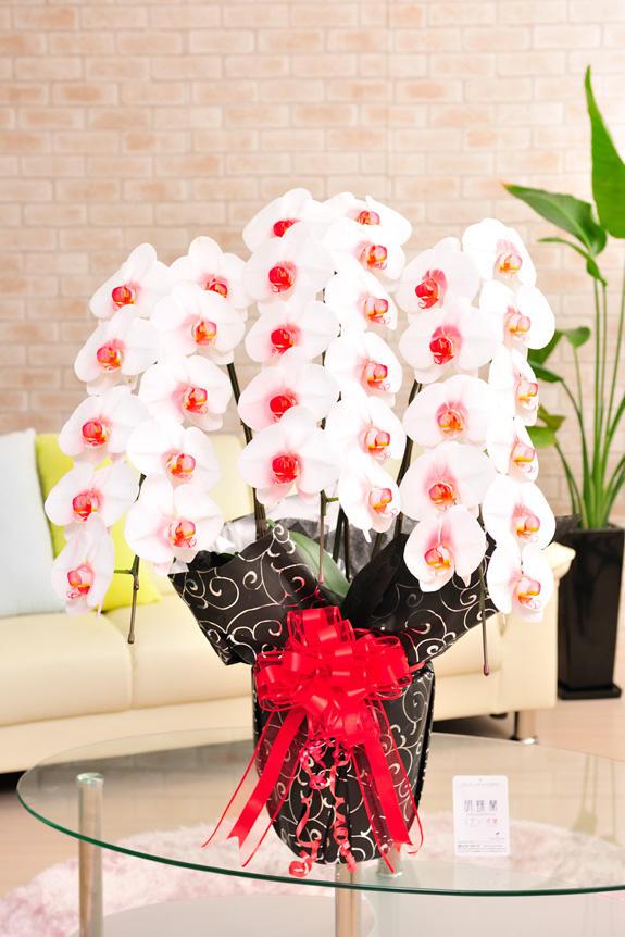カラー胡蝶蘭 彩 - irodori - 3本立30輪以上(リップ)