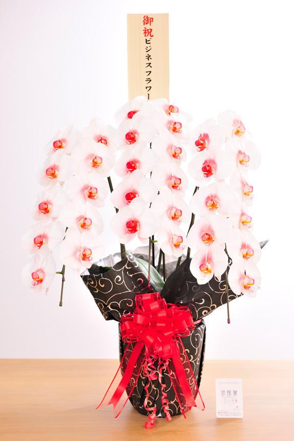 <p>カラー胡蝶蘭彩(irodori)にも、立札かメッセージカードを無料でお付けすることが出来ます。</p>