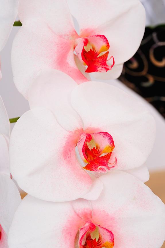 <p>近くで見ても丁寧な着色が確認できるカラー胡蝶蘭彩(irodori)</p>