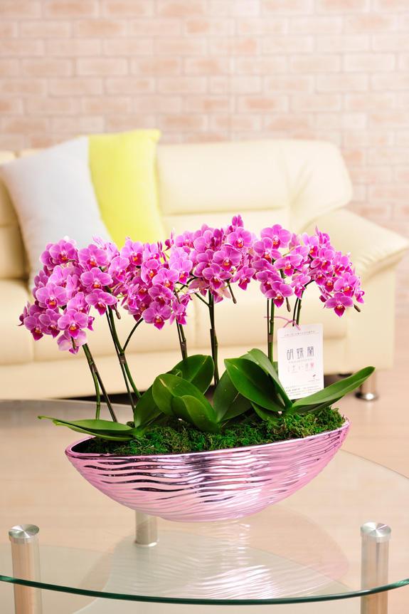 <p>ピンク系のかわいらしいお花が特徴の胡喋蘭ミディ 8本立 カララ</p>