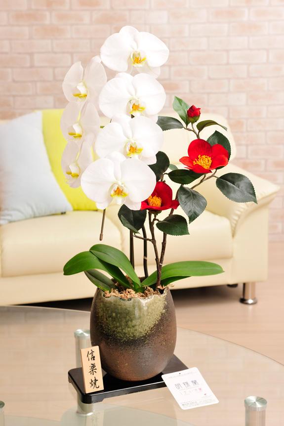 <p>胡喋蘭 大輪1本立&造花椿(信楽焼鉢)は胡蝶蘭も立派な事ながら、造花の椿もインパクトがあります。<br /> </p>