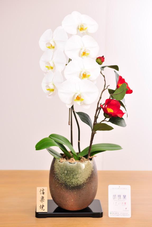 <p>胡蝶蘭の純白と、造花椿の真紅、信楽焼鉢の渋さを一度に楽しめる胡喋蘭 大輪1本立&造花椿(信楽焼鉢)</p>