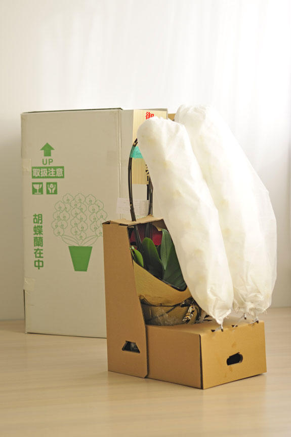 <p>胡蝶蘭は厳重梱包の宅配でお届けします。</p>