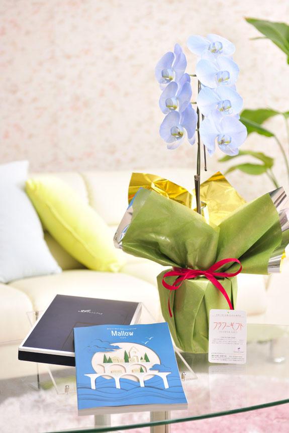 <p>カラー胡蝶蘭 彩 - irodori - 1本立(ライトブルー)とカタログギフト(ミストラル/マロウ)のイメージ</p>