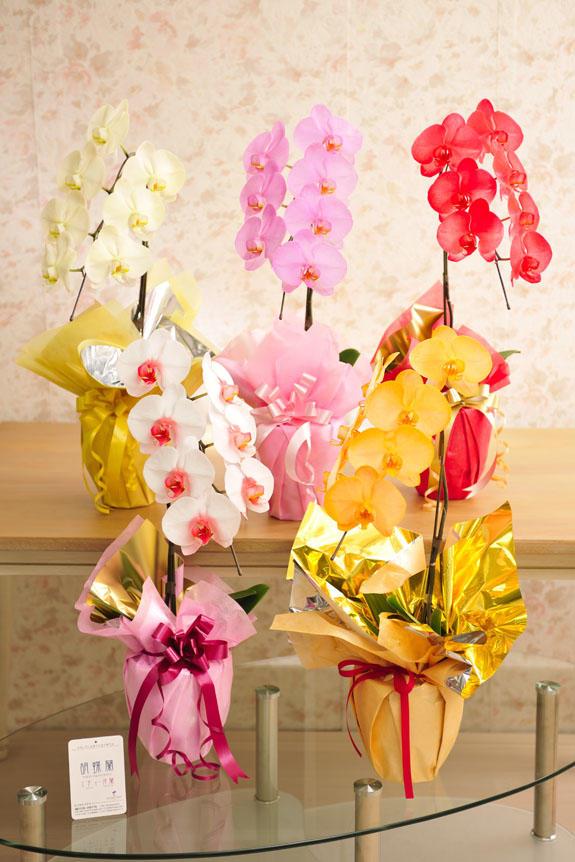 <p>カラー胡蝶蘭 彩 - irodori - 1本立(暖色系)より、お好きなカラーをお選びいただけます。<br /> 下段左より(1)リップ(白&赤) (2)オレンジ (3)黄色 (4)ピンク (5)赤</p>