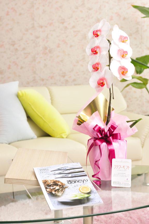 花とギフトのセット 選べる花色のカラー胡蝶蘭 彩 - irodori - 1本立(暖色系)とこだわりの食材カタログギフト(ダンチュウ/CA)