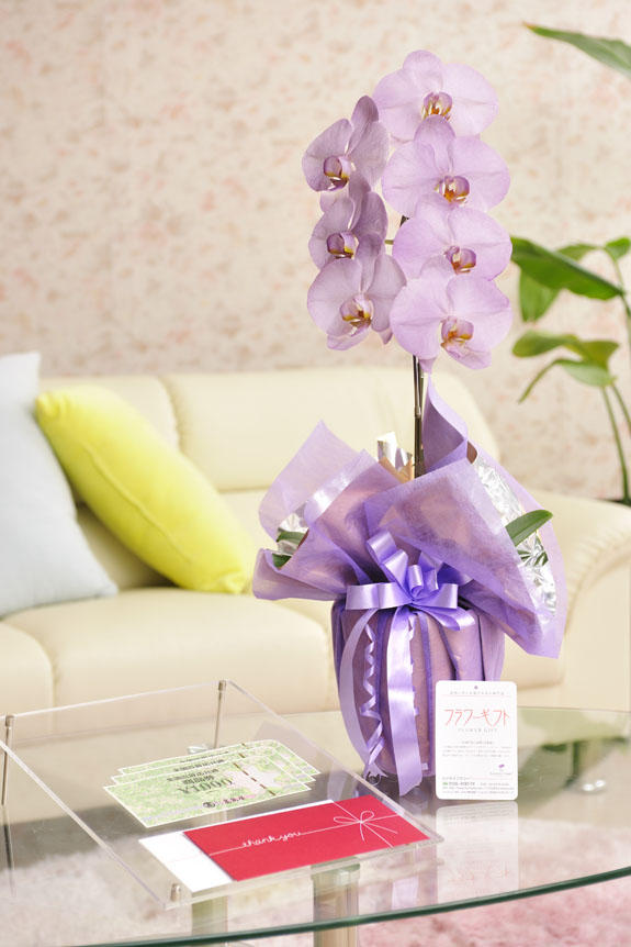 <p>カラー胡蝶蘭 彩 - irodori - 1本立(紫)と商品券(全国百貨店共通商品券)のイメージ</p>