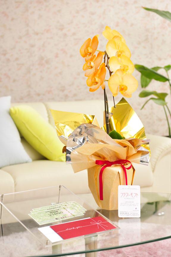 <p>カラー胡蝶蘭 彩 - irodori - 1本立(オレンジ)と商品券(全国百貨店共通商品券)のイメージ</p>