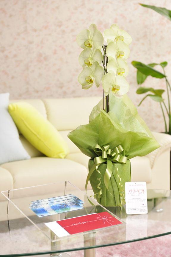 <p>カラー胡蝶蘭 彩 - irodori - 1本立(緑)と商品券(VJAギフトカード)のイメージ</p>