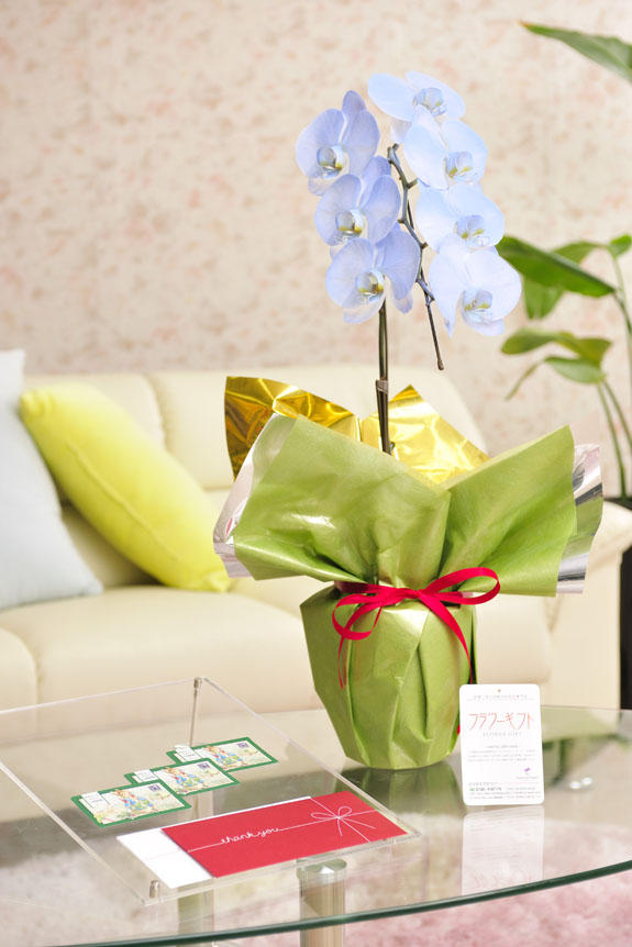 <p>カラー胡蝶蘭 彩 - irodori - 1本立(ライトブルー)と商品券(図書カード)のイメージ</p>