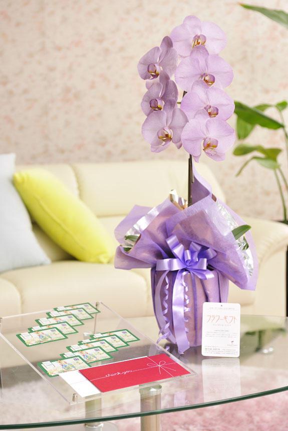 <p>カラー胡蝶蘭 彩 - irodori - 1本立(紫)と商品券(図書カード)のイメージ</p>