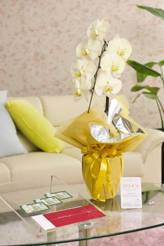 <p>カラー胡蝶蘭 彩 - irodori - 1本立(黄色)と商品券(図書カード)のイメージ</p>