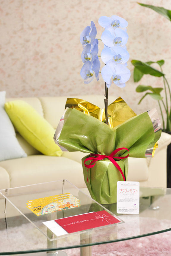 <p>カラー胡蝶蘭 彩 - irodori - 1本立(ライトブルー)と商品券(こども商品券)のイメージ</p>