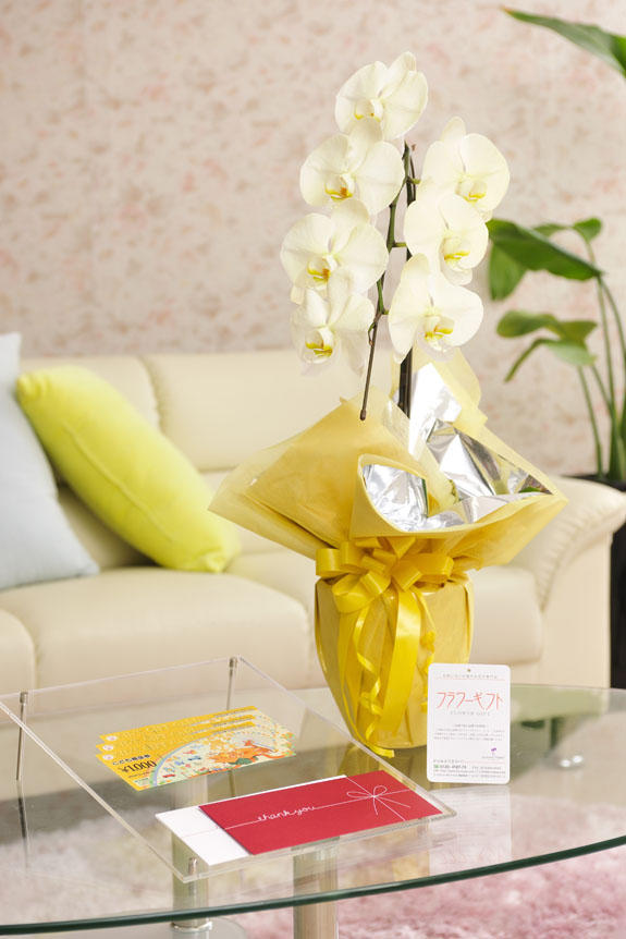 <p>カラー胡蝶蘭 彩 - irodori - 1本立(イエロー)と商品券(こども商品券)のイメージ</p>