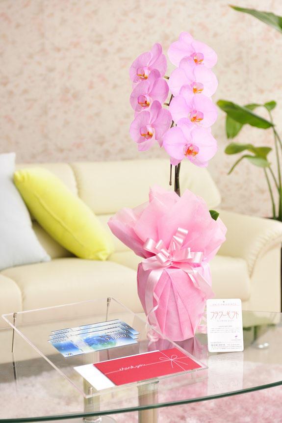 <p>カラー胡蝶蘭 彩 - irodori - 1本立(ピンク)と商品券(VJAギフトカード)のイメージ</p>