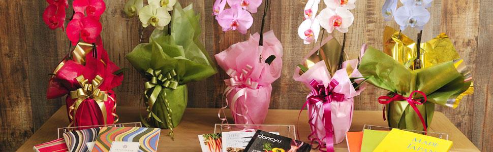 胡蝶蘭とギフトカタログ