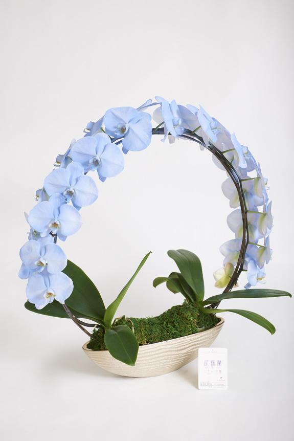 <p>色、形状、花器のどれをとっても他と差をつけられるのがカラー胡蝶蘭彩(irodori)リングの特徴です。</p>
