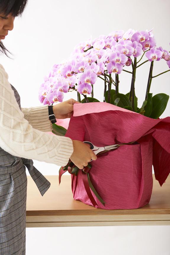 <p>外側の包装紙を取っていただくと、通常の胡蝶蘭とは全く異なる仕様になっています。</p>