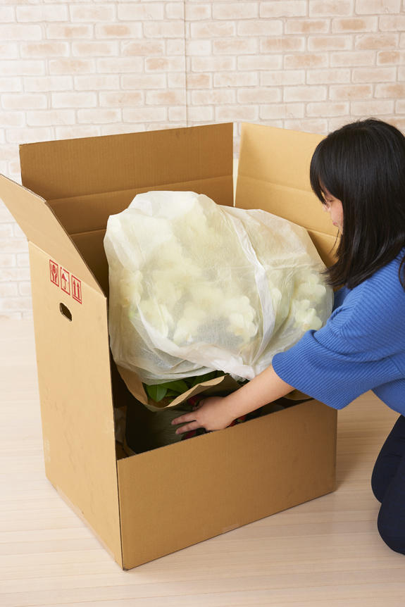 <p>シェアオーキッドも、しっかり梱包で安心のお届け。</p>