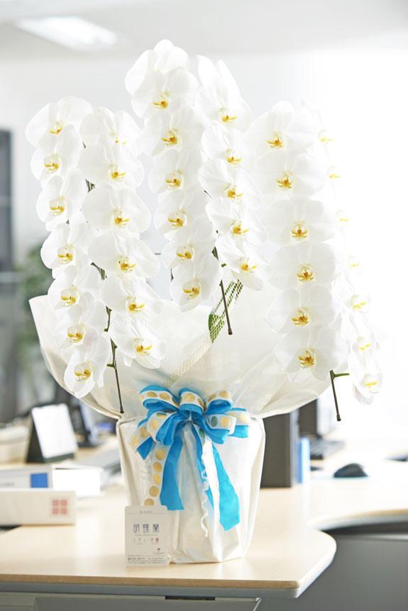 <p>通常の胡蝶蘭3本立(白)よりもインパクトのあるこだわりラッピングとリボンが特徴の商品</p>