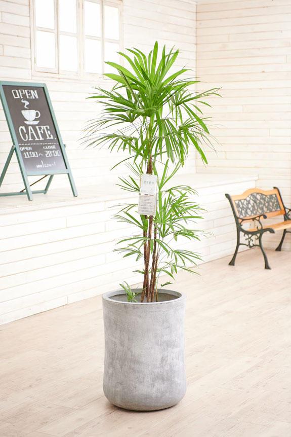 <p>硬質で重厚感を感じさせる鉢カバーが観葉植物シェフレラにお洒落さをプラスに演出します。</p>