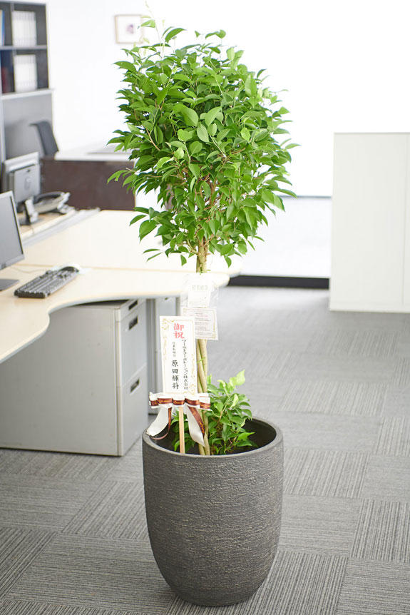 <p>オフィス、店舗、リビングなど、様々な室内空間にマッチするスタイリッシュなデザインの鉢カバーが特徴の商品です。</p>