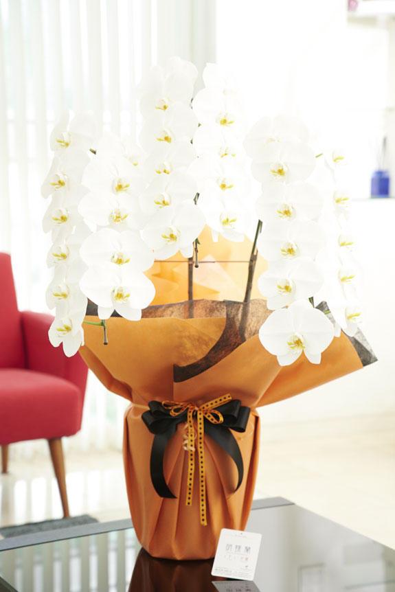 <p>通常の胡蝶蘭3本立よりもインパクトのあるこだわりラッピングとリボンが特徴の商品</p>
