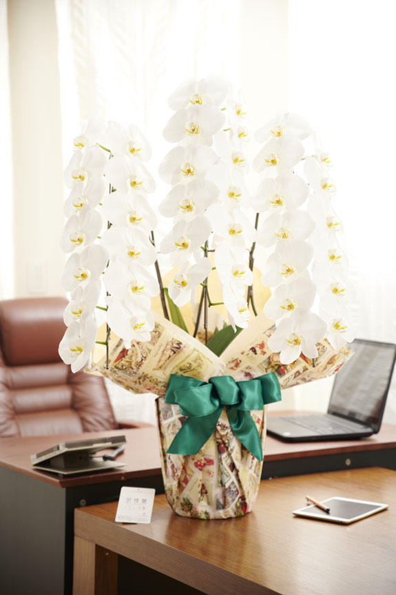 <p>オフィスや店舗に飾っていただいても存在感抜群のこだわりラッピング胡蝶蘭3本立</p>