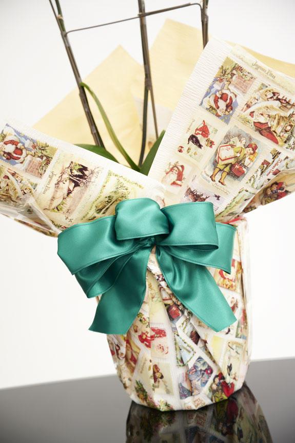 <p>[X'mas Gift]全面にサンタクロースが描かれた包装紙に緑色のリボン、クリスマス時期を意識したこだわりラッピング胡蝶蘭です。季節感を演出した胡蝶蘭ギフトをお探しの方にはお薦めしたい一品です。</p>