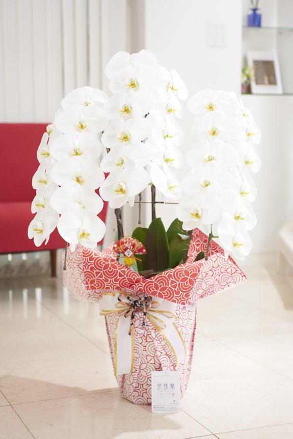<p>通常の胡蝶蘭3本立(白)よりもインパクトのあるこだわりラッピングとリボンが特徴の商品のお正月バージョン</p>