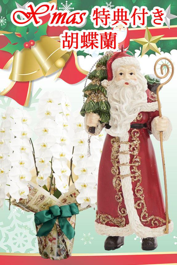 【X'mas特別企画商品】こだわりラッピング[X'mas Gift]胡蝶蘭 3本立(白)2万円コース