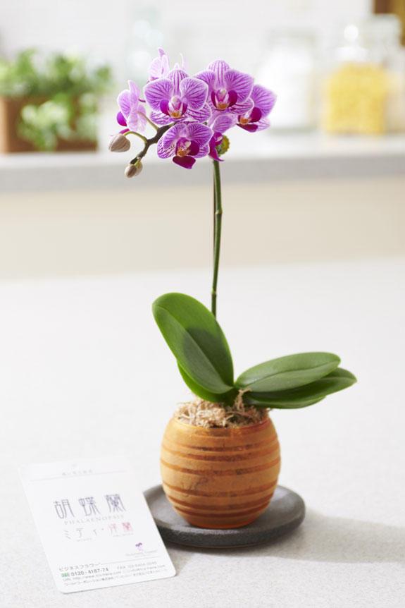<p>胡蝶蘭ミディはどんなシーンにも馴染み、さりげない存在感が魅力のお花のプレゼントとなるでしょう。</p>