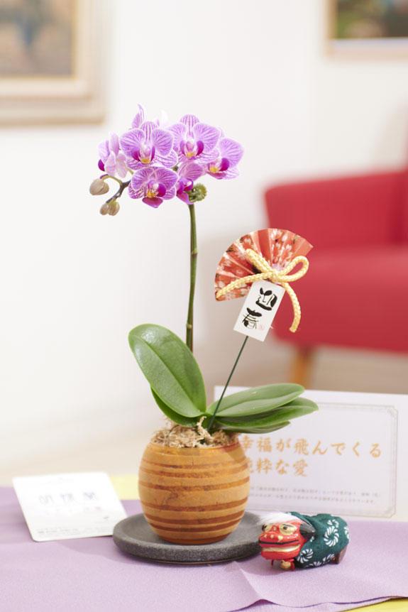 <p>マイクロサイズのミニ胡蝶蘭豆蘭ガラスと、正月を感じさせるピック&立ち獅子の飾り、風呂敷、花言葉カードがセットになった迎春用の商品です。</p>