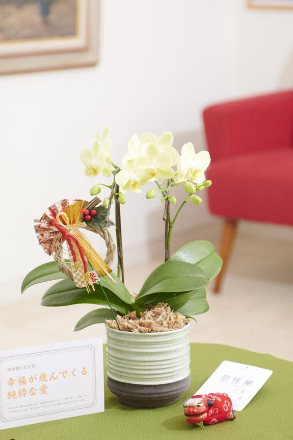 <p>マイクロサイズのミニ胡蝶蘭胡蝶と、正月を感じさせるピック&立ち獅子の飾り、風呂敷がセットになった迎春用の商品です。</p>