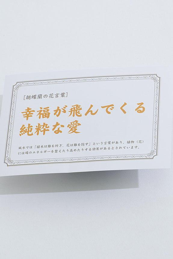 <p>胡蝶蘭の花言葉「幸福が飛んでくる/純粋な愛」を記した花言葉カード付きとなります。お渡しする先様にもお花を贈った気持ちをダイレクトに伝えることが可能です。</p>