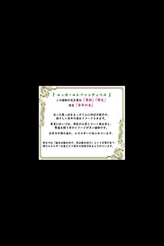 <p>縁起の良い観葉植物の花言葉(メッセージ性)を伝える「花言葉カード」が付いています。</p>