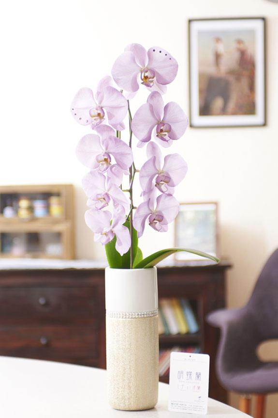 <p>リビング、キッチン、オフィス、ショップなど、様々なシチュエーションの室内空間にもマッチするデザインのカラー胡蝶蘭です。</p>