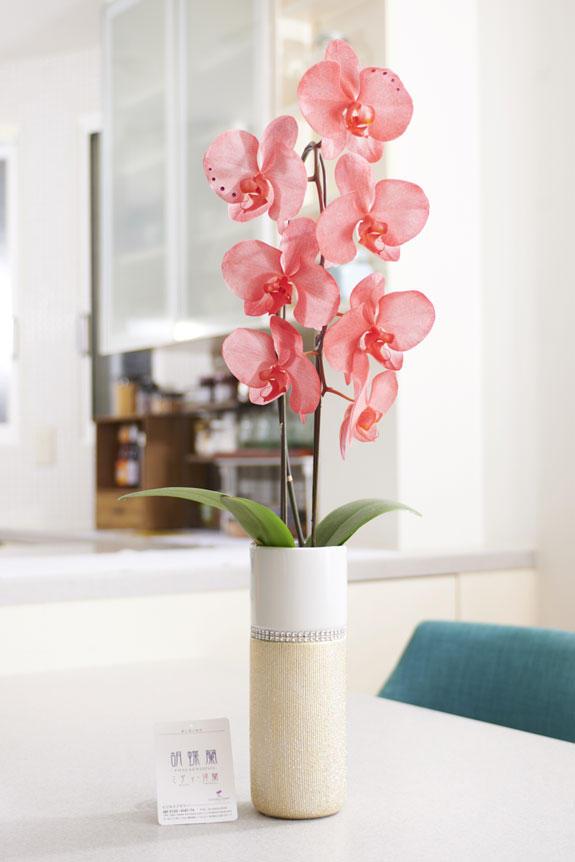 <p>7月の誕生石ルビーをイメージしたカラーリングが特徴の胡蝶蘭大輪商品です。</p>