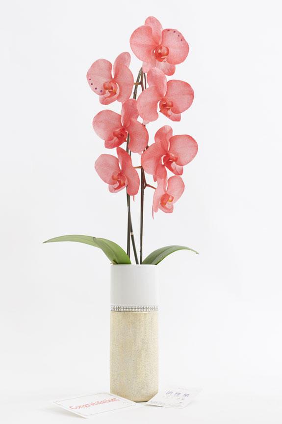 <p>ゴールドのエンボス加工を施した円柱鉢が、高級感、お洒落感、特別感を感じさせるデザインの胡蝶蘭1本立です。</p>