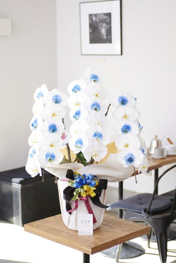 <p>特殊加工で爽やかに染まったカラー胡蝶蘭彩(irodori)は、開店祝い、開業祝い、周年祝い、イベントなど、様々なシーンで活躍するお祝い花です。</p>
